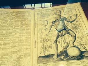 Here is a neat early pull out book showing various parts of the anatomy.  The flap is in the abdominal area.